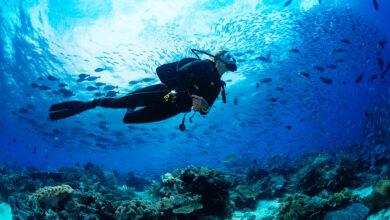 going scuba diving